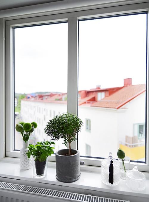 plantas para decorar estudio